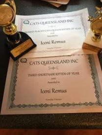 2016-11-28_remus-best-kitten-2