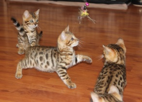 2017-05-12_Kittens (2)
