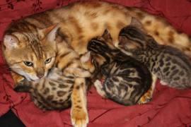 Nov Kittens1