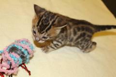 Nov Kittens2