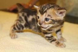Nov Kittens3